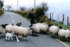 Traffic_jam_in_ireland_2